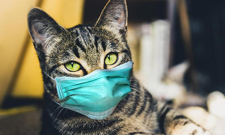 Covid 19, Covid in animals, Human to cat transmission of Covid virus , Covid strains in cats and dogs