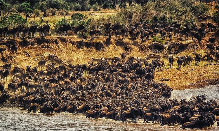 mammal, Mammal Imigration, First-ever global initiative to map mammal migrations, initiative to map mammal migrations