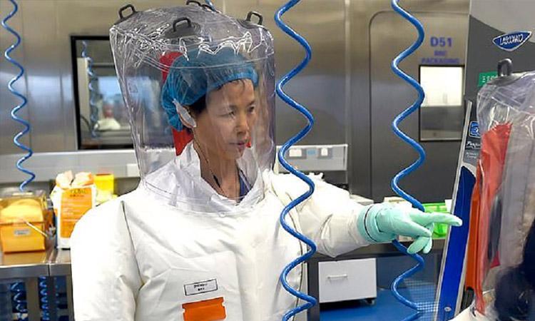 China, United States, Bat woman, Did China's 'Bat Woman' , Did China's 'Bat Woman' receive $600K from US, Did China's 'Bat Woman' receive $600K from US for coronavirus work?