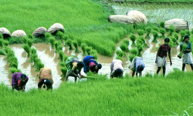 Kharif-crop